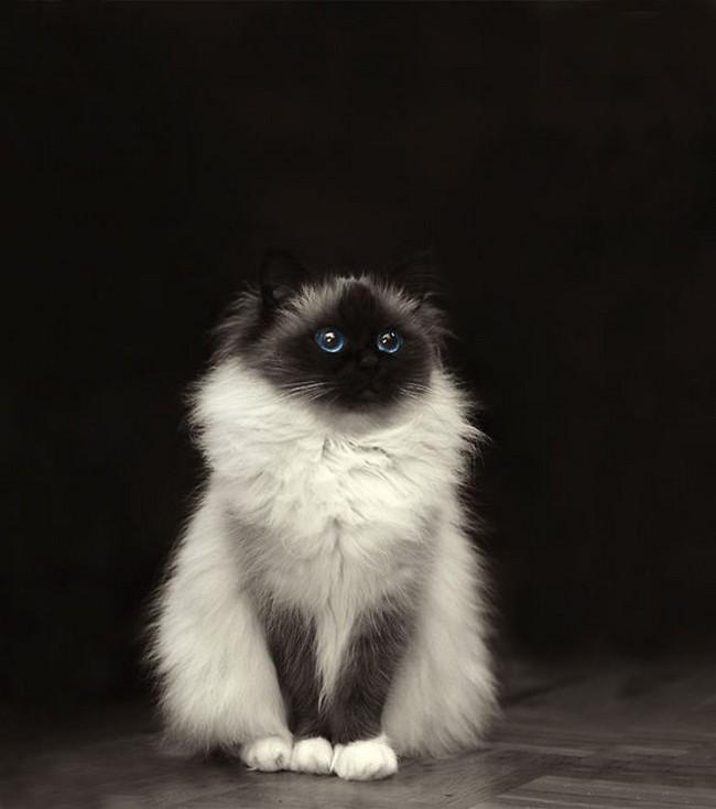 15 gatti che sembrano fatti di ovatta. Tutti da abbracciare
